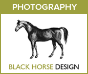 Black Horse Design Photography (Derbyshire Horse)